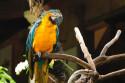 Papagei im Bali Bird and Reptile Park