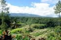 Reisterrassen beim Gunung Agung, Bali
