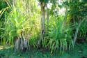 Pflanze im Taman Nasional Bali Barat