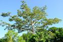 Bäume im Taman Nasional Bali Barat