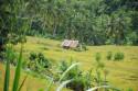 Reisterrasse im Zentrum von Bali