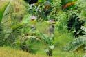 Schreine in den Reisterrassen von Bali