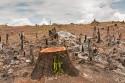 Regenwaldabholzung: Weniger Luft, dafür mehr Palmöl